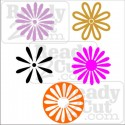 Daisy Collection - vector images