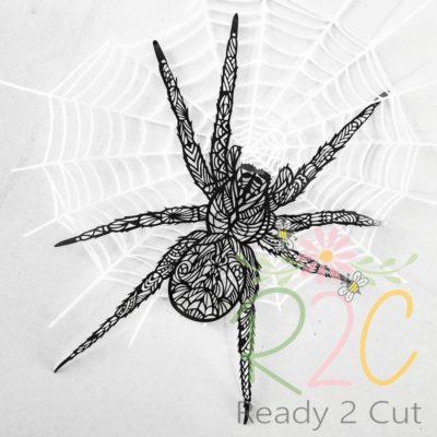 Spider Aen photo