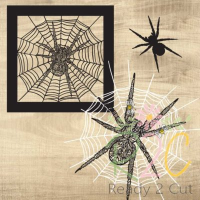 Images included in Spider Zen